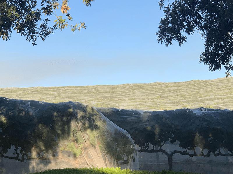 Vineyard Bee Netting - Viticulture