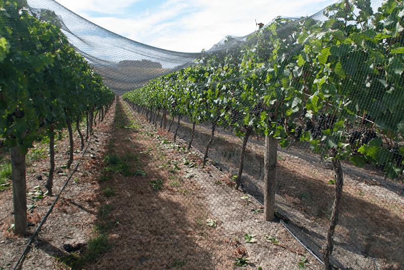 Bird Netting - Winemaking